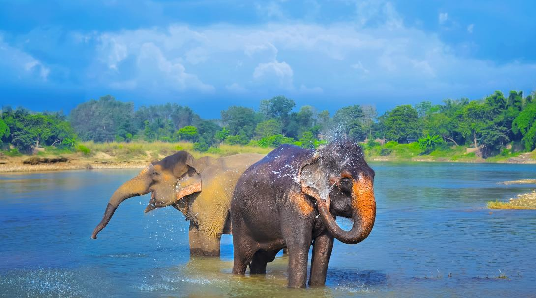 Travellers watch the elephants blow water onto themselves as they hike through Chitwan National Park in Nepal.